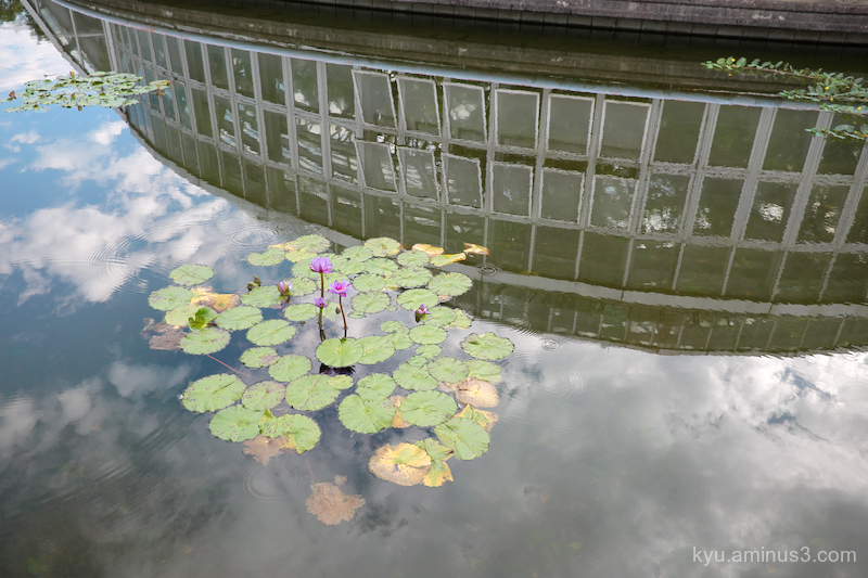reflection water-lily botanical-garden Kyoto
