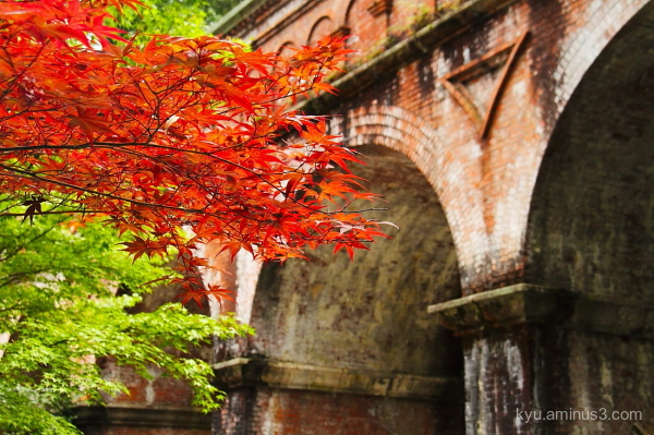 autumn maple aquarium Nanzenji temple Kyoto