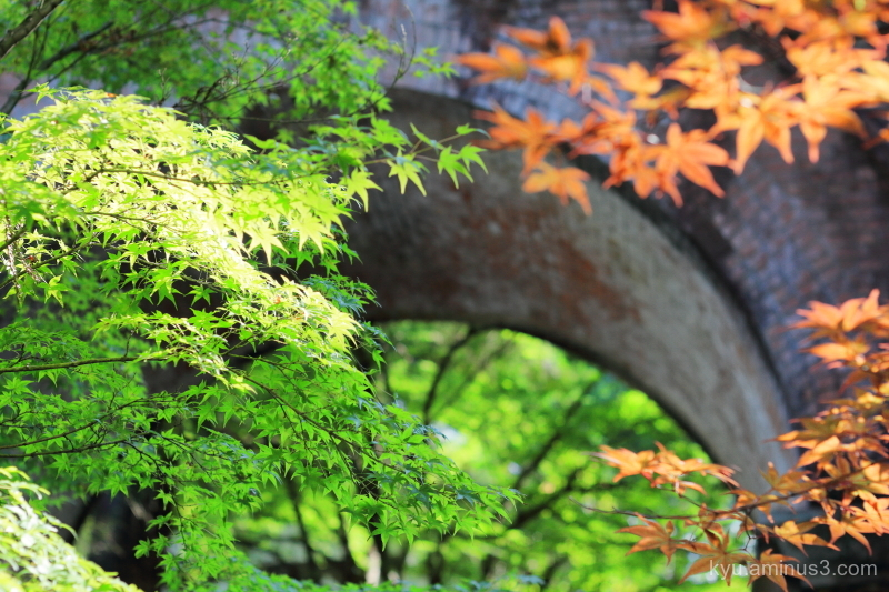autumn maple aqueduct Nanzenji temple Kyoto