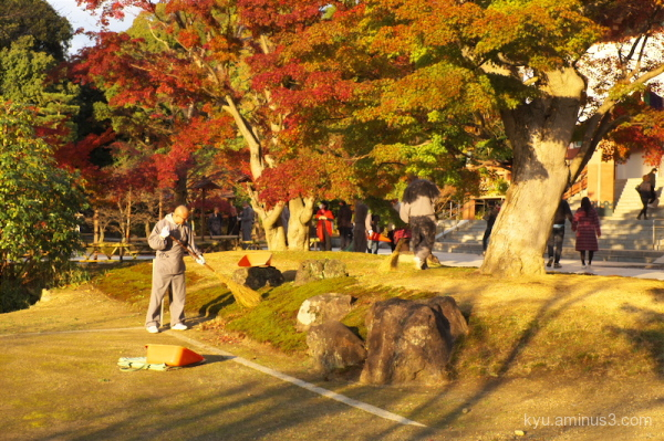 autumn Chishakuin temple Kyoto