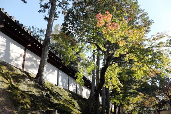 autumn Tofukuji temple Kyoto