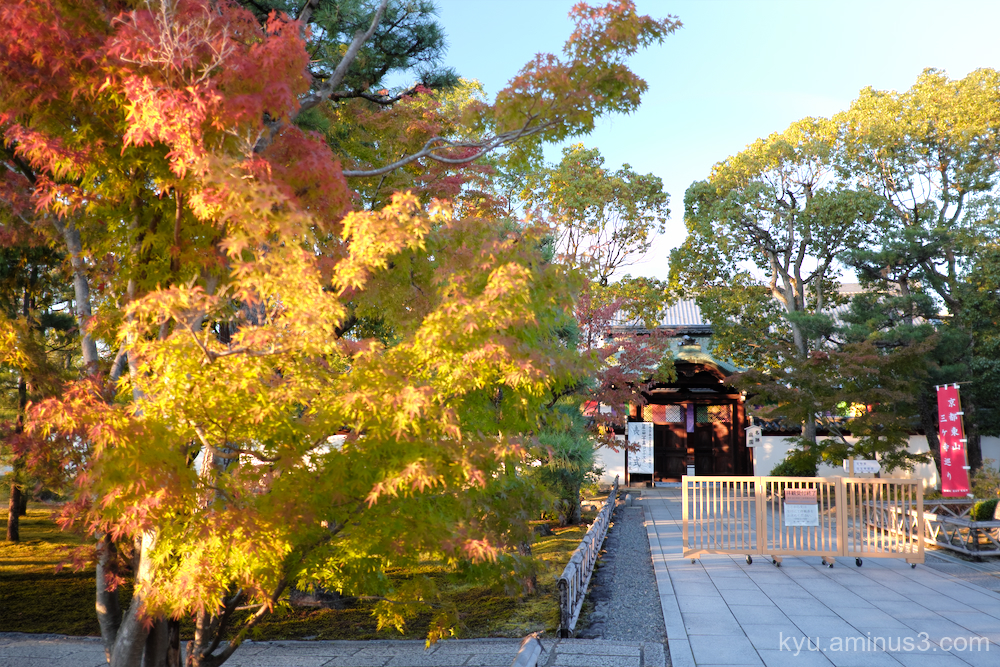 autumn maple Chishakuin temple Kyoto