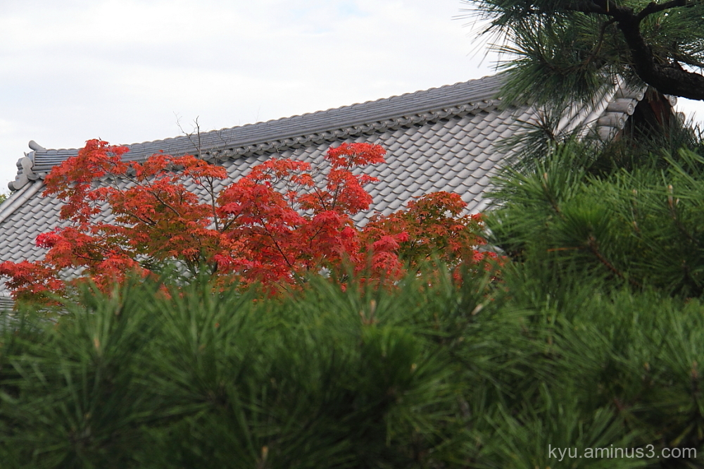 autumn red-maple Rokuohji temple Kyoto