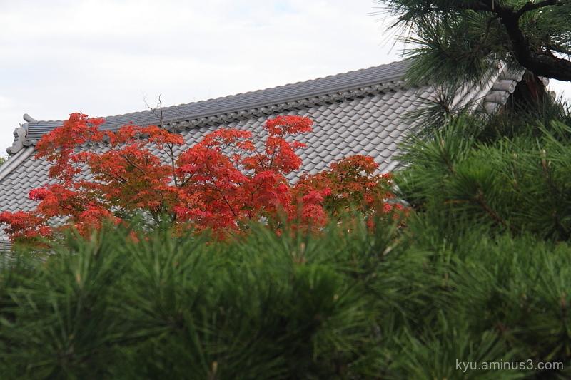 autumn red-maple Rokuohji temple Kyoto