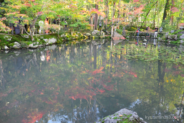 autumn red-maple garden pond Tenjyuan temple Kyoto