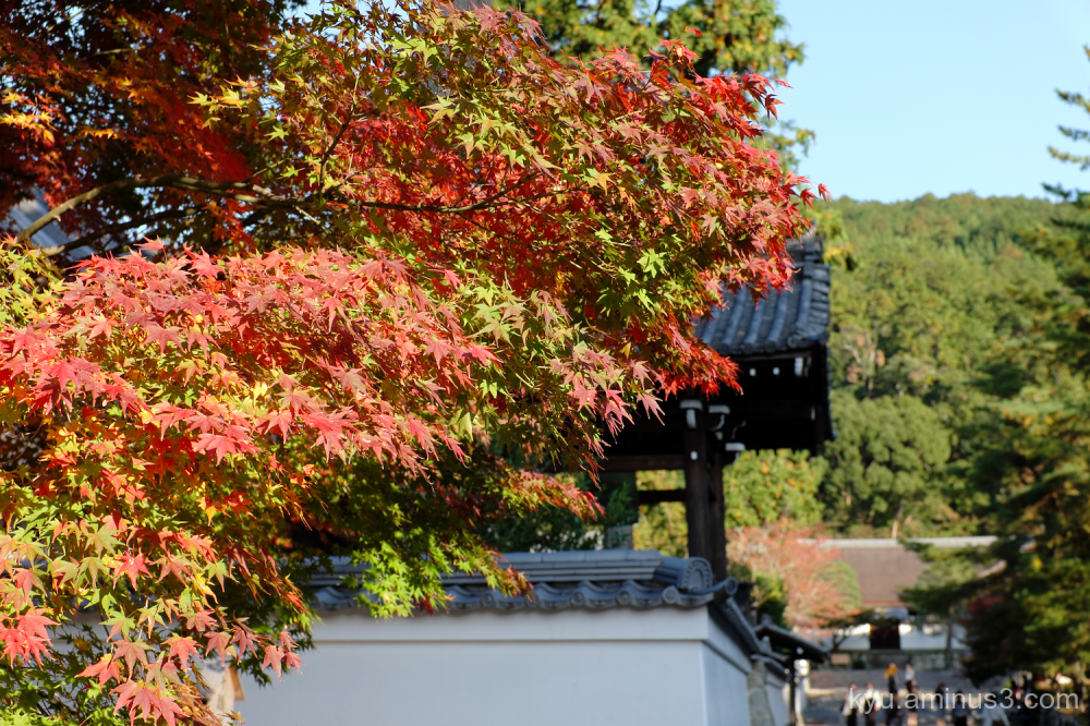 autumn red-maple Nanzenji temple Kyoto
