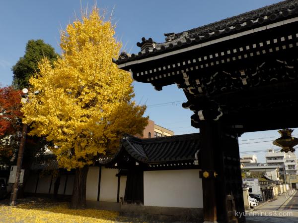 autumn giautumn ginkgo autumn Bukkoji temple Kyoto
