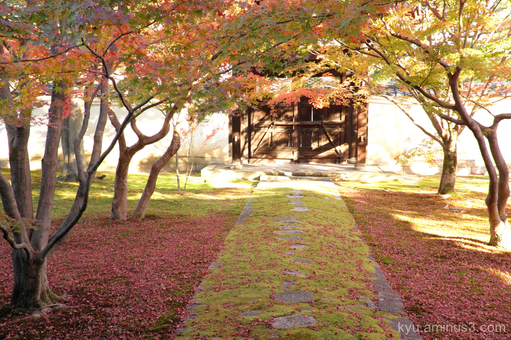 autumn red-maple garden Myokakuji temple Kyoto