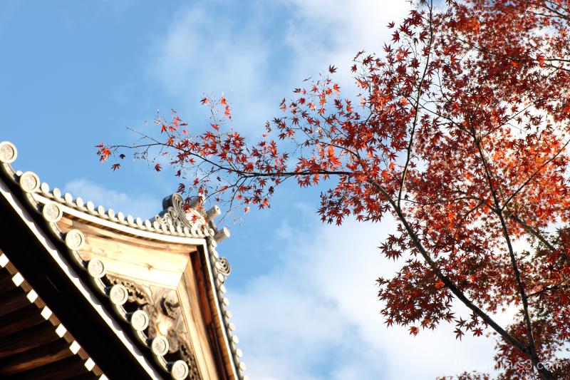 autumn red-maple blue-sky Myokenji temple Kyoto
