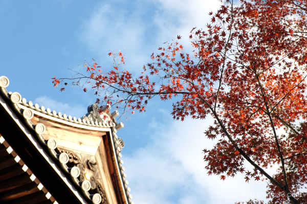 autumn red-maple blue-sky Myokenji temple Kyoto