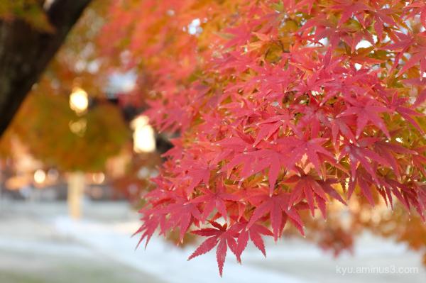 autumn red-maple Myokenji temple Kyoto