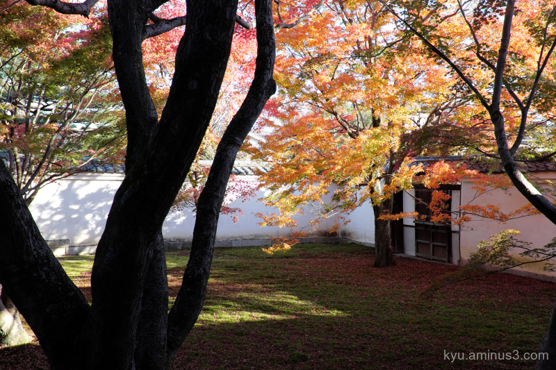 autumn red-maple garden myokenji temple Kyoto