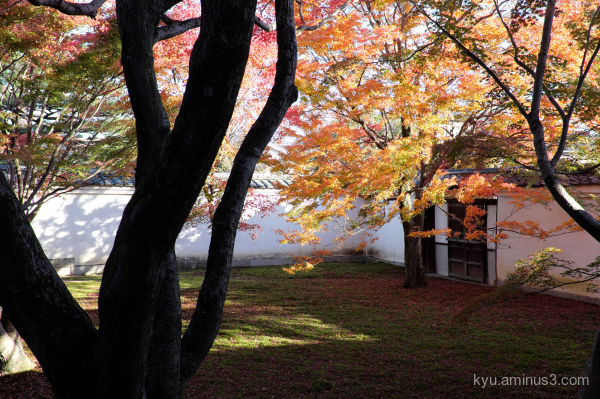 autumn red-maple garden myokenji temple Kyoto