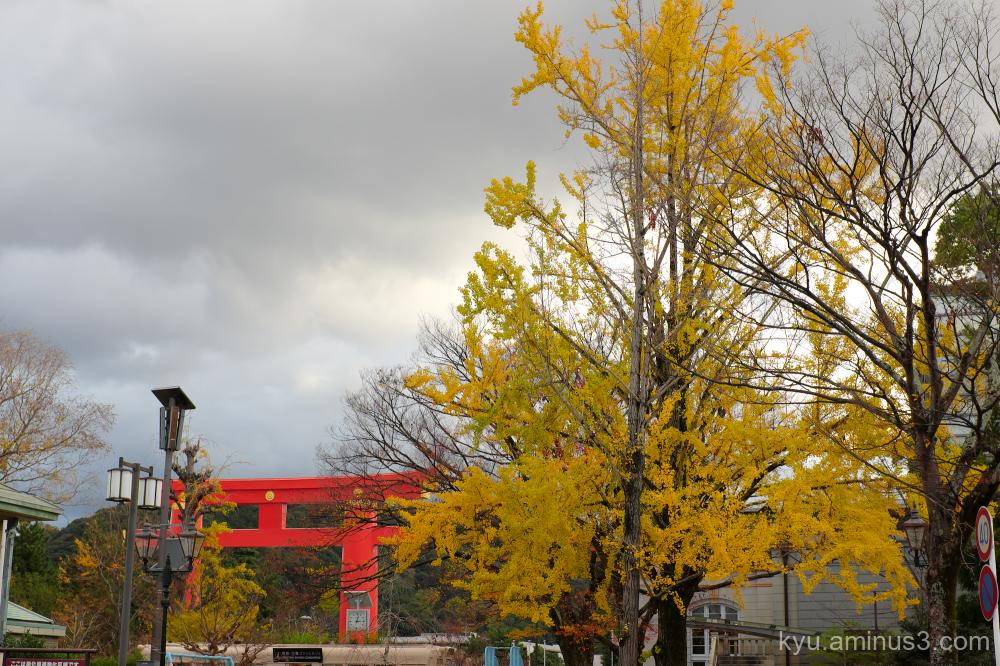 autumn ginkgo Okazaki Kyoto