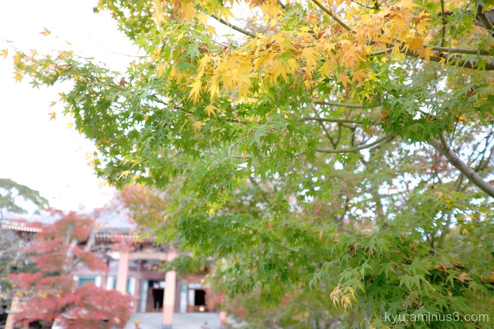 autumn maple Chishakuin temple Kyoto