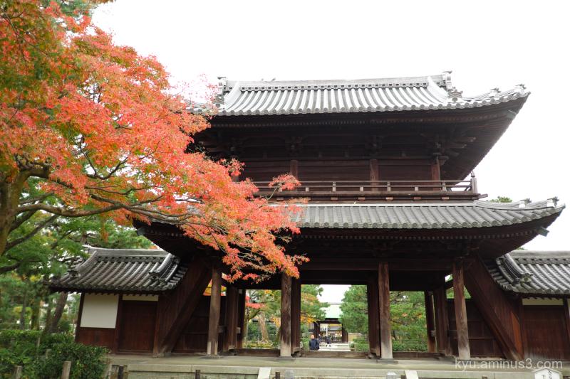 autumn red-maple gate Kenninji temple Kyoto