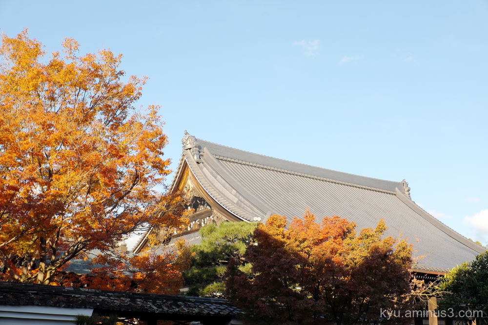 autumn red-maple myokakuji temple Kyoto