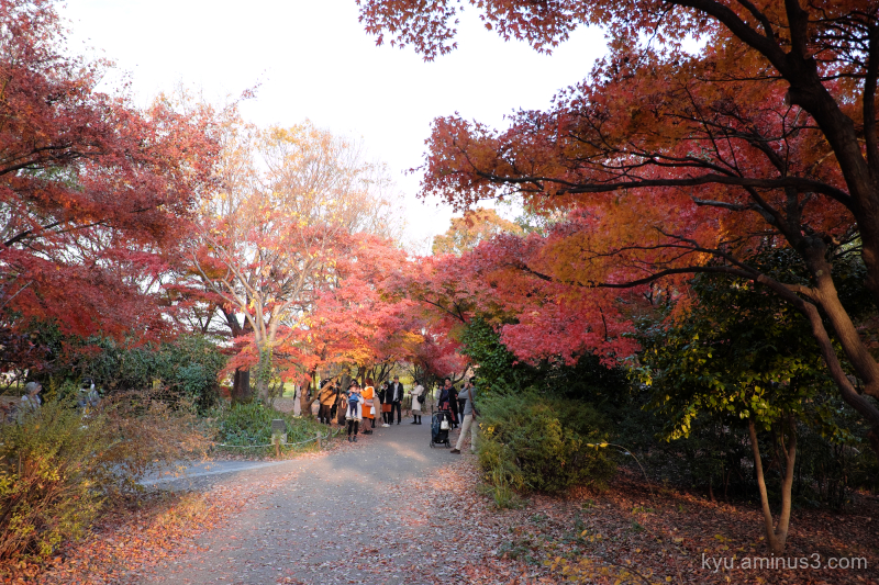 autumn red-maple Umekoji park Kyoto