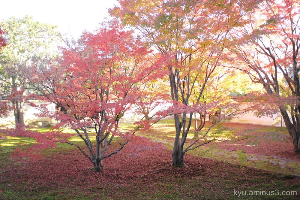 autumn red-maple myokakuji temple Kyoto