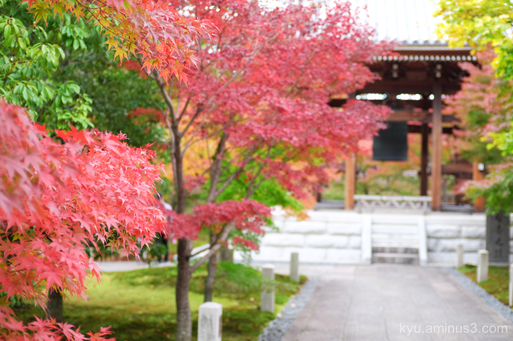 red-maple late-autumn Chishakuin temple Kyoto