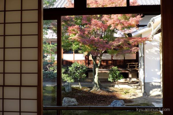 garden red-maple autumn Myokakuji temple Kyoto