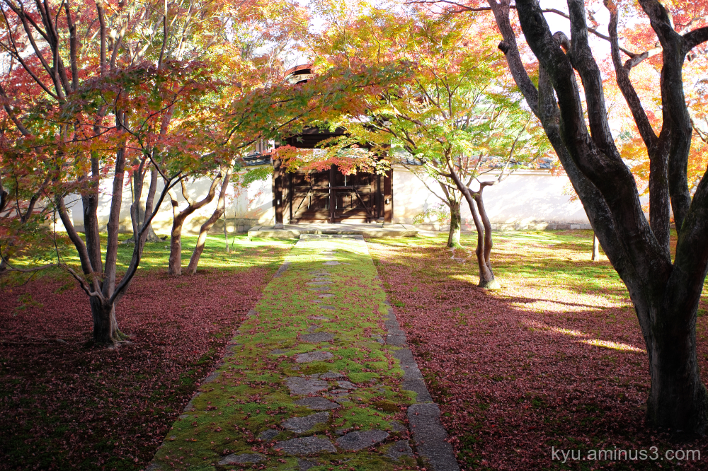 red-maple autumn Myokakuji temple Kyoto