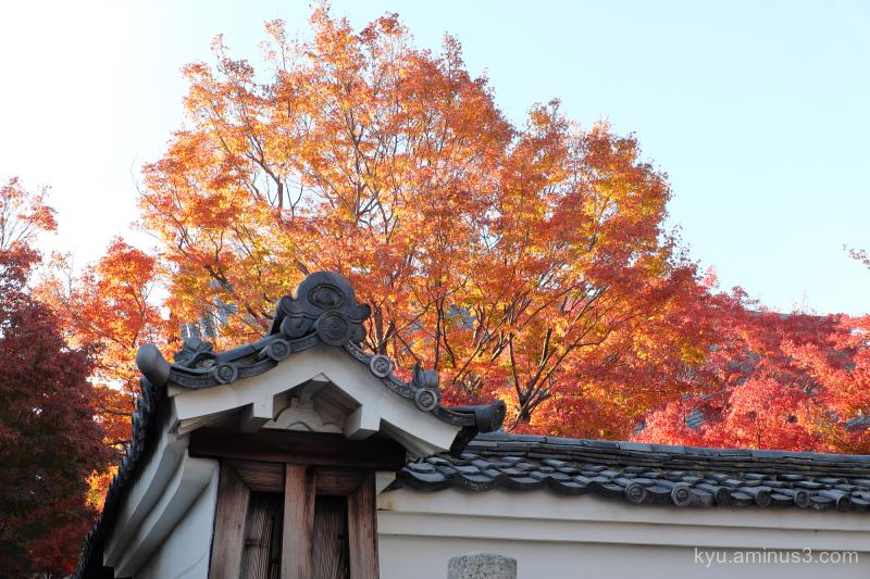 red-maple autumn Myokakuji temple Kyoto