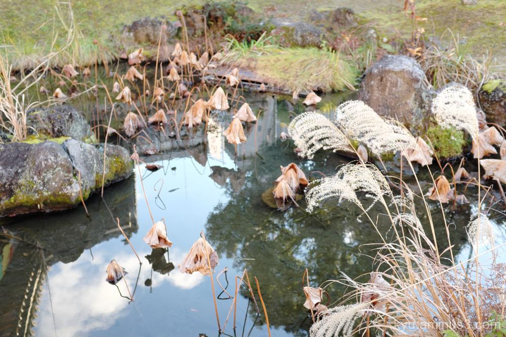 winter Chishakuin temple Kyoto