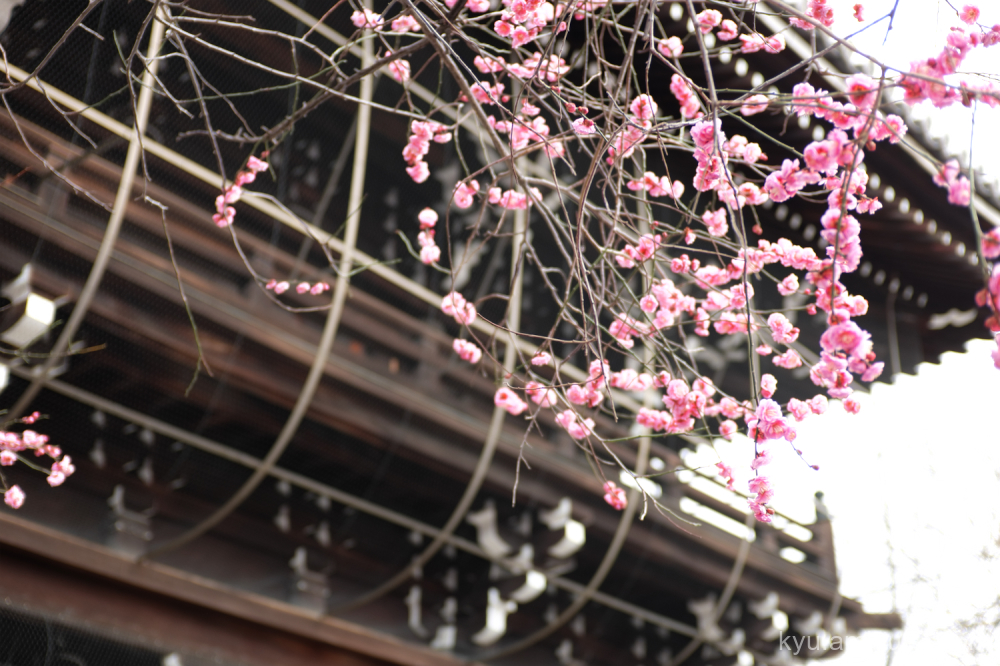 winter cloudy Japanese-plum Koshoji temple Kyoto