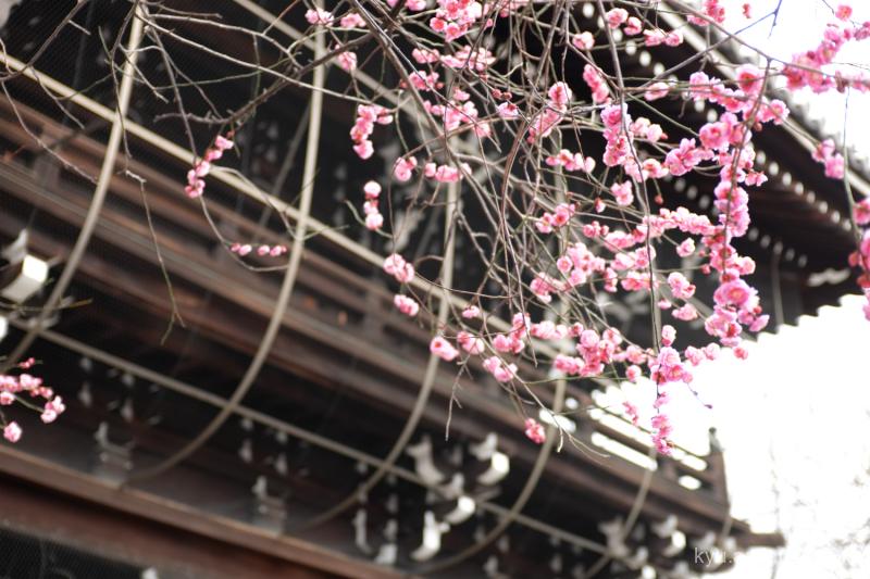 winter cloudy Japanese-plum Koshoji temple Kyoto