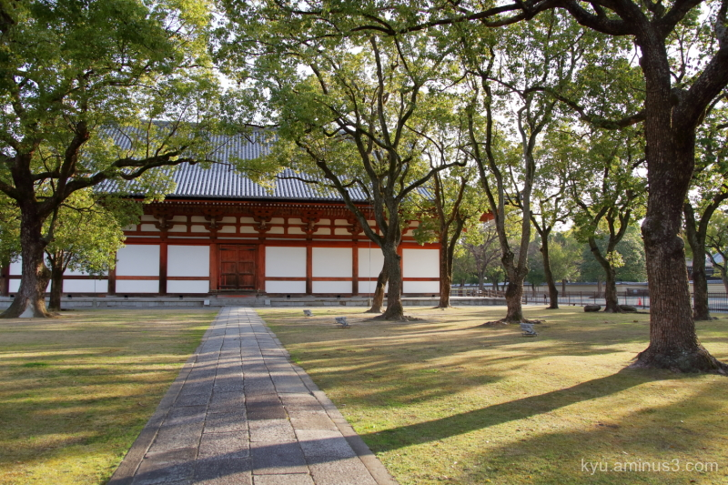 early-spring afternoon-light Toji temple Kyoto