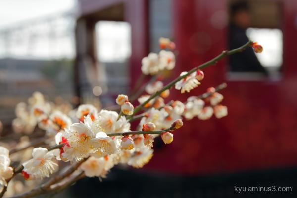 spring railway Umekoji park Kyoto