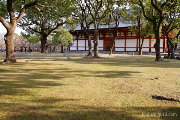 afternoon-light Toji temple Kyoto