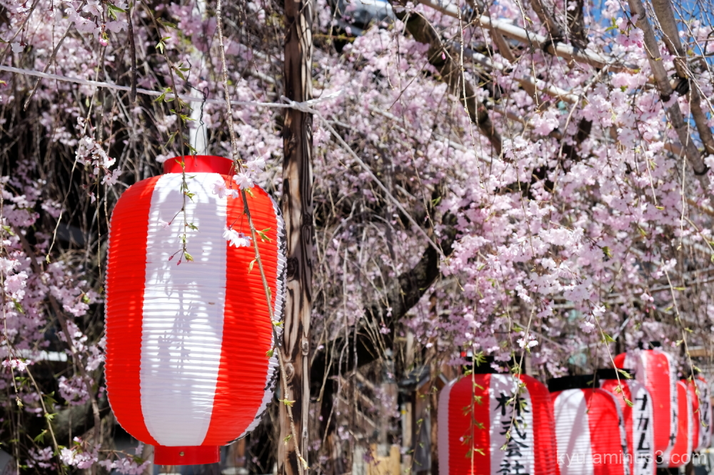 paper-lantern drooping-cherry Bukkoji temple Kyoto