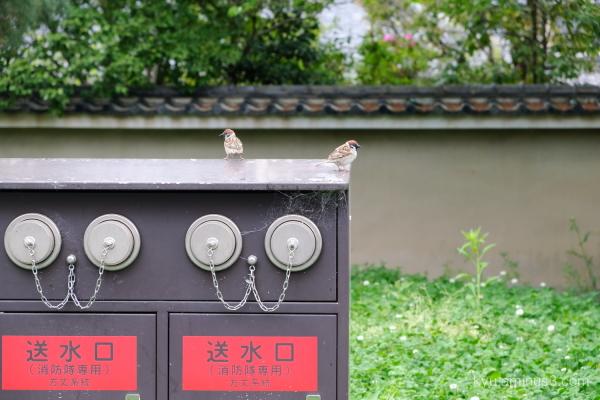 sparrow Kyoto