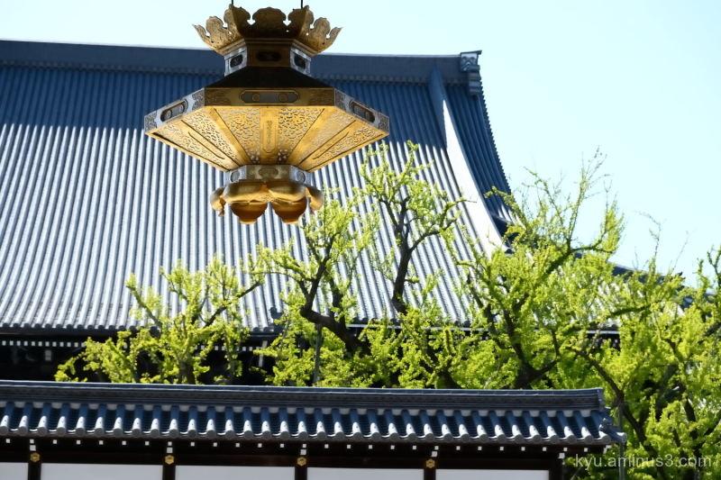 fresh-green gate Nishihonganji temple Kyoto