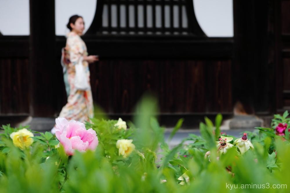 peony flowers Kimono Kenninji temple Kyoto