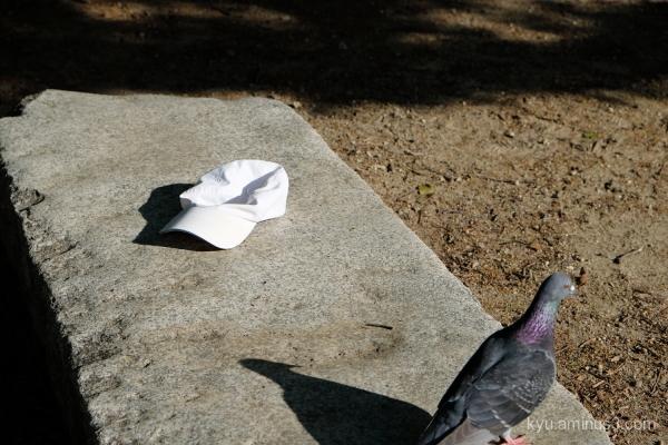 cap pigeon park Kyoto