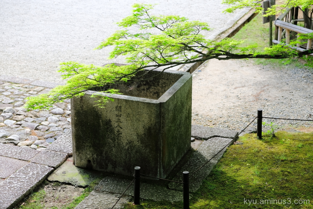 quietness green-maple Shinnyodo temple Kyoto