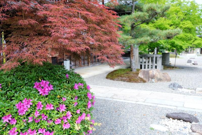 azalea blossoms Myomanji temple Kyoto