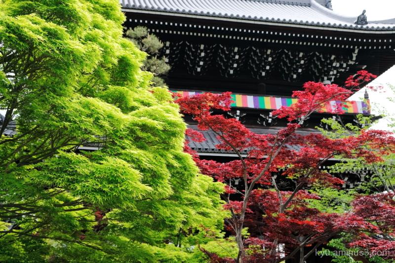 gate maple green red Konkaikomyoji temple Kyoto