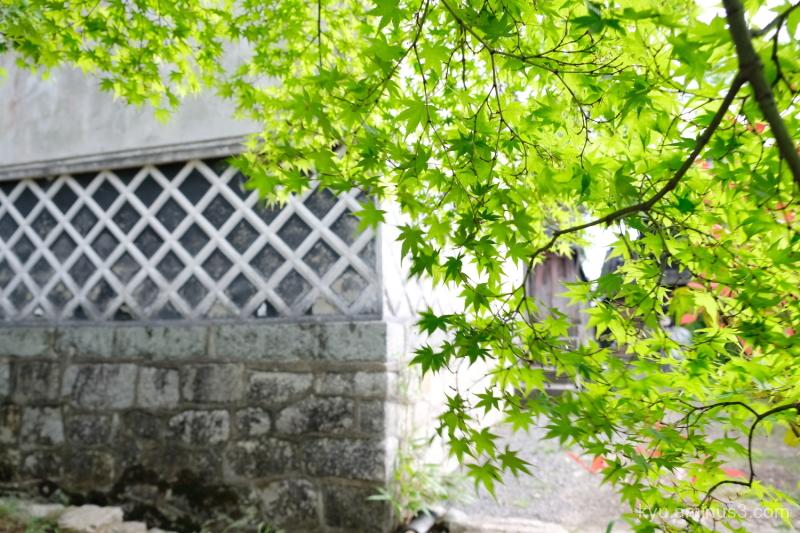 green-maple warehouse kura Shinnyodo temple Kyoto