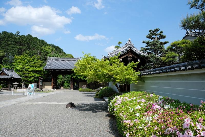 blue-sky azalea blossoms Myomanji temple Kyoto