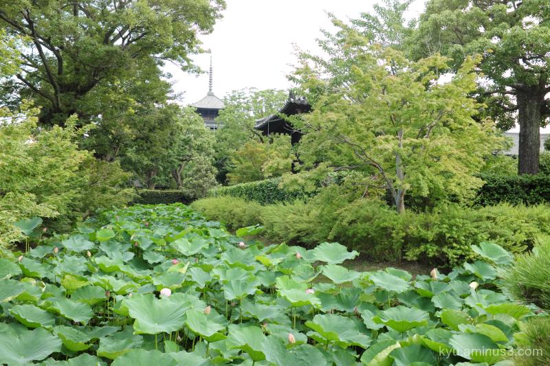 lotus pagoda Toji temple Kyoto
