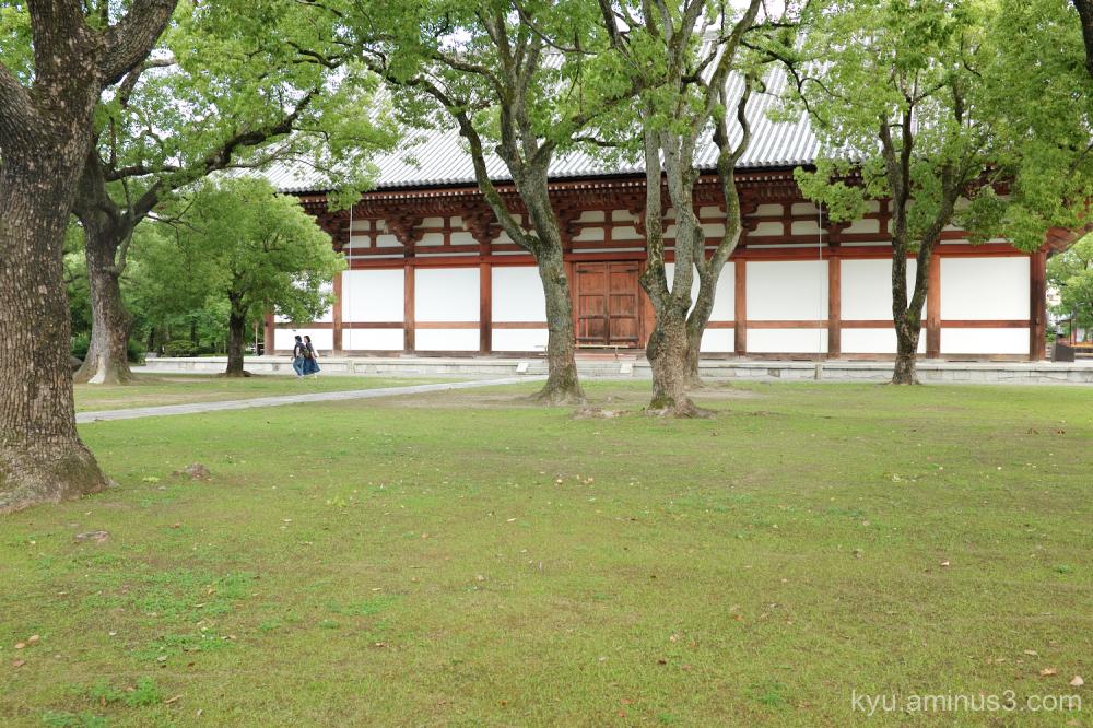 sunny-day Toji temple Kyoto