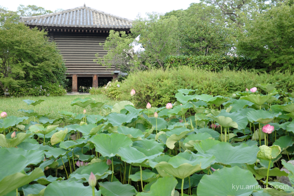 lotus Toji temple Kyoto