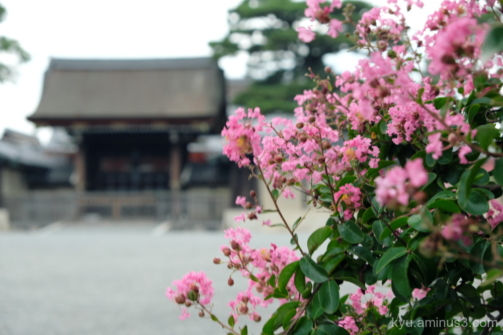 crepe-myrtle blossoms Gosho Kyoto