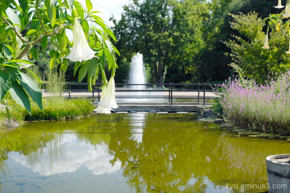 blue-sky botanical-garden Kyoto