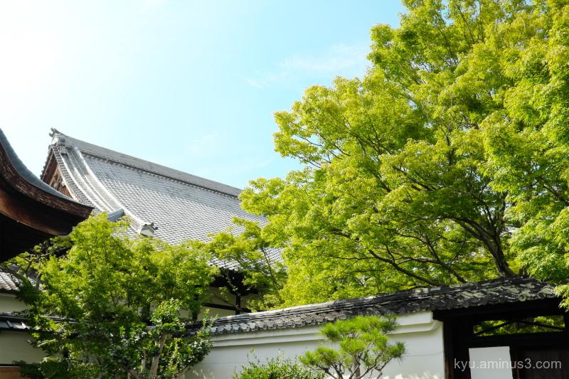 afternoon-light Myokakuji temple Kyoto
