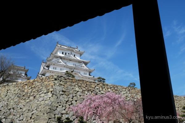 cherry-blossoms Himeji-castle Himeji Hoyogo